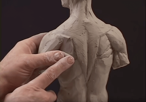 Constructing the posterior musculature