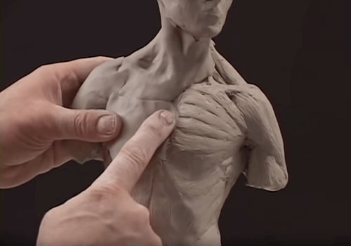 Applying a flesh layover atop the musculature